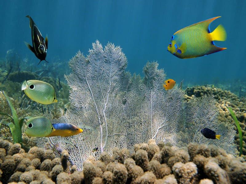 Den färgrika tropiska fisken och ett hav fläktar royaltyfri fotografi