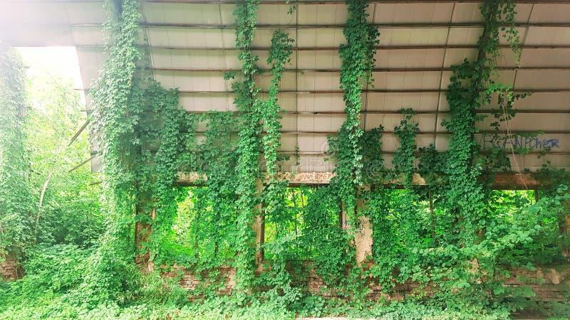 Den förstörda hangaren var bevuxen med buskar arkivbild