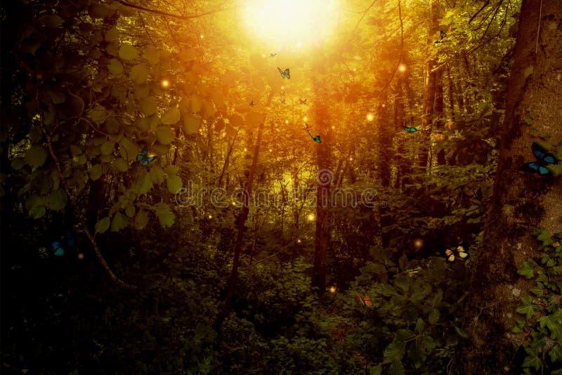 Den förtrollade skogen med fjärilar och ljus mousserar royaltyfri illustrationer