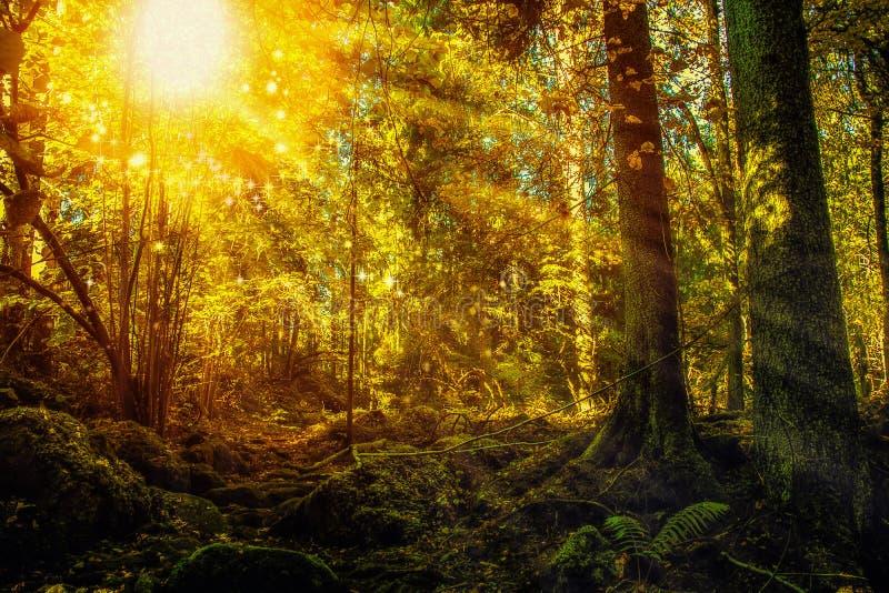 Den förtrollade skogen med mossigt vaggar och moussera ljus stock illustrationer