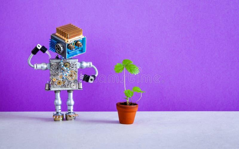 Den förvånade robotträdgårdsmästaren ser en grodd av jordgubben som är fullvuxen i en blomkruka Violett purpurfärgad bakgrund, ko royaltyfri fotografi