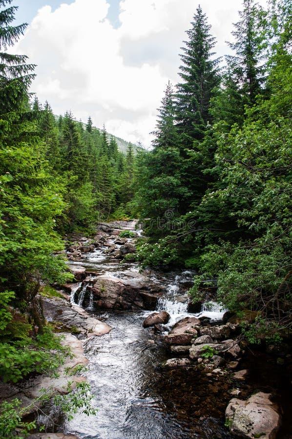 Den fantastiska floden av Krkonoše royaltyfri bild