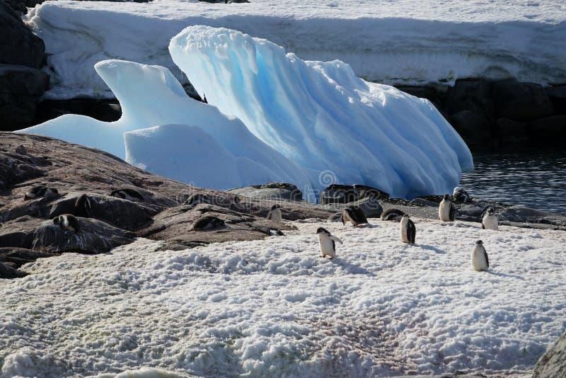 Den fantastiska landcapen av Antarktis royaltyfria foton