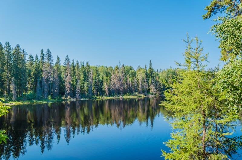 Den fantastiska naturen av ?n av Valaam Spektakulärt landskap i solig dag för sommar Karelia Ryssland royaltyfri bild