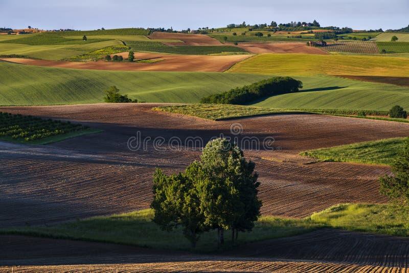 Den fantastiska sikten över kullar med färgrika gröna fält och röd jord på framdelen i mitten där är träd arkivfoto
