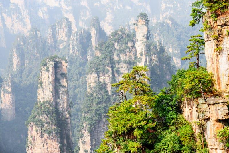 Den fantastiska sikten av gröna träd som växer på, vaggar Avatarberg arkivfoto
