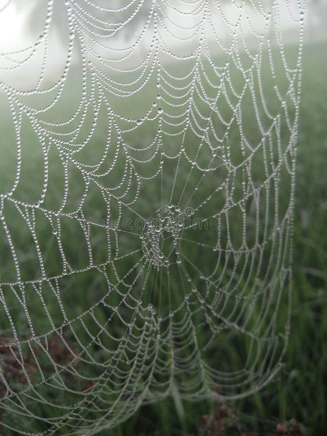 Den fantastiska spindeln förtjänar fotografering för bildbyråer