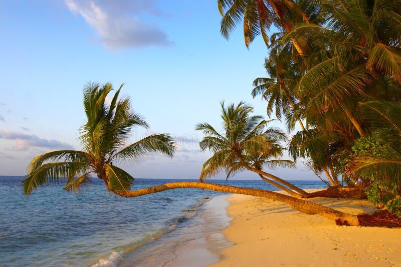 den fantastiska stranden gömma i handflatan solnedgångtrees arkivfoto