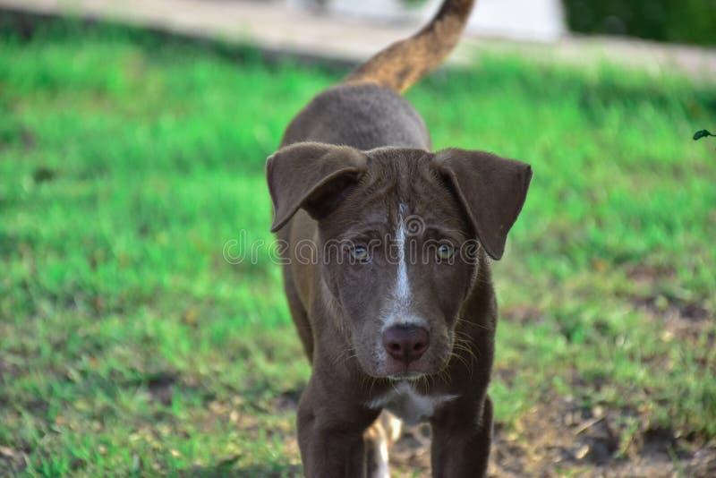 Den fattiga hunden sikten av ensamhet royaltyfria foton