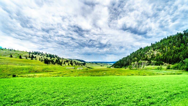 Den fertila jordbruksmarken bland Rollinget Hills längs huvudvägen 5A mellan Kamloops och Merritt arkivfoto
