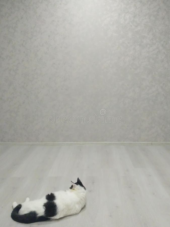 Den feta katten lägger på golvet royaltyfri fotografi