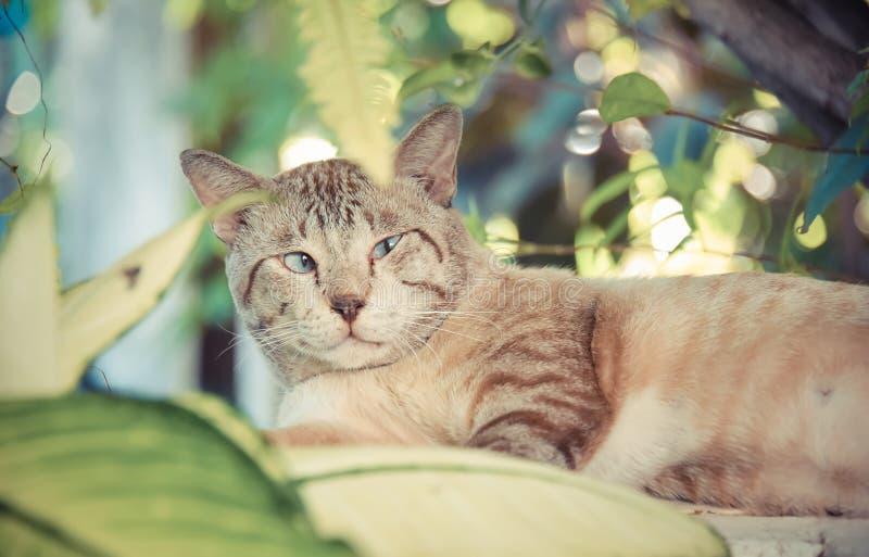 Den feta snöig katten visar ångest och larmar uttryck i arkivfoton
