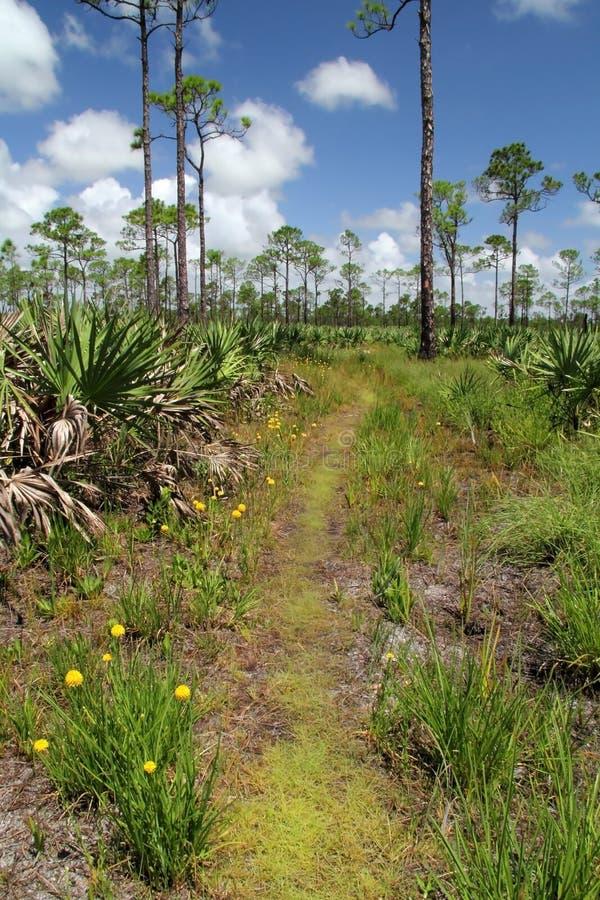 Den Florida trailen fotografering för bildbyråer