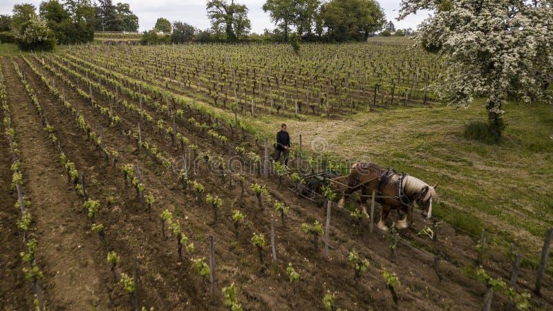 Den flyg- sikten arbetar vingården med en utkasthäst, Helgon-Emilion-Frankrike royaltyfri foto