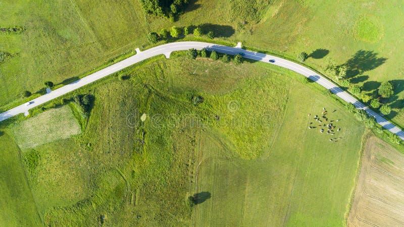 Den flyg- sikten av en landsväg med bilar, mellan jordbruks- fält med nötkreaturet är betande i fältet royaltyfri bild