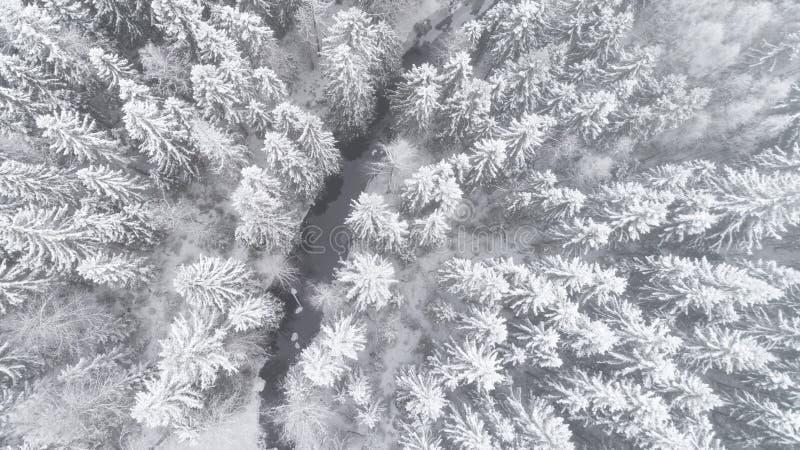 Den flyg- sikten av härlig flodthorughsnö täckte skogen i lugna plats arkivfoto