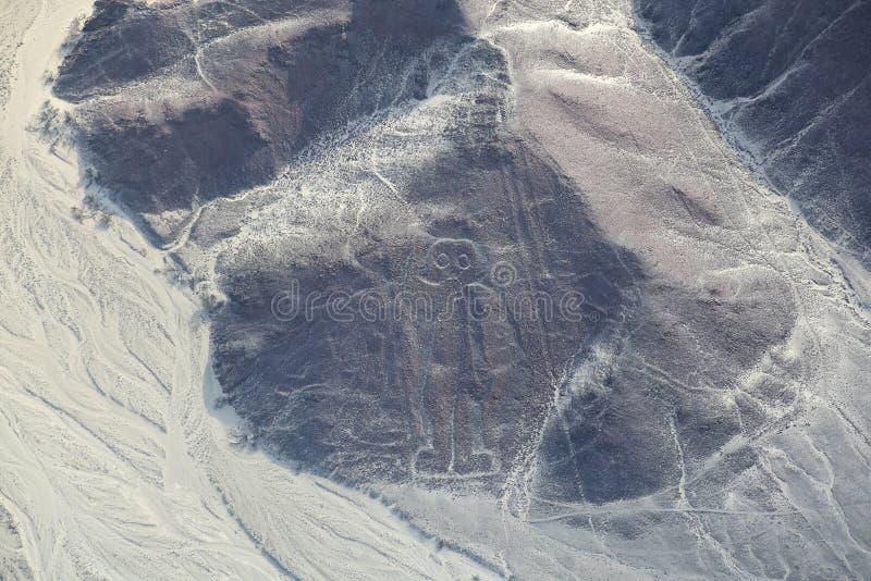 Den flyg- sikten av Nazca fodrar - astronautgeoglyph, Peru arkivbilder