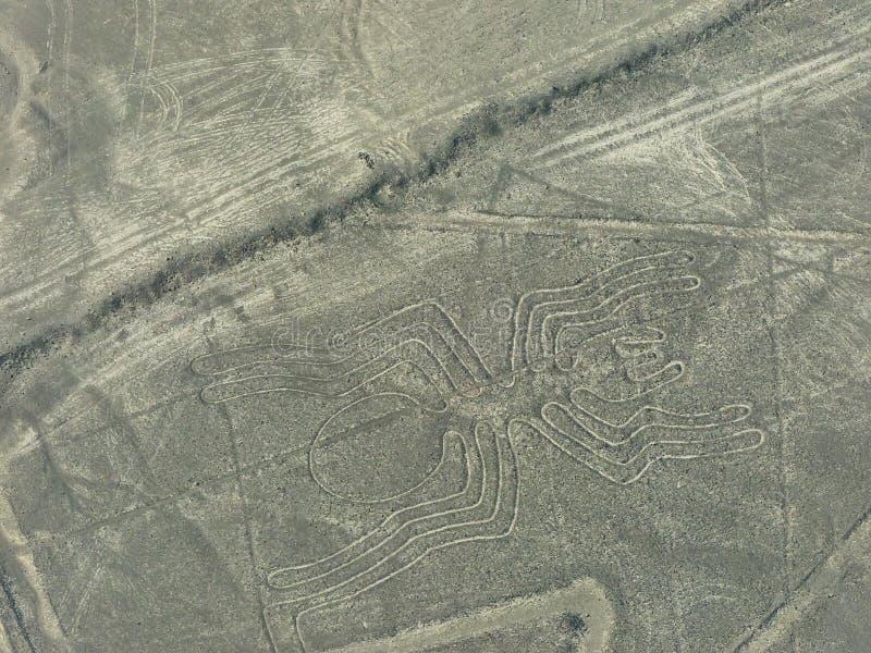 Den flyg- sikten av Nazca fodrar - spindelgeoglyph, Peru arkivfoton