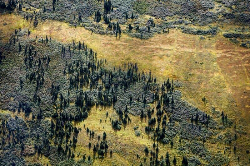 Den flyg- sikten av sörjer träd och tundran i Alaska fotografering för bildbyråer
