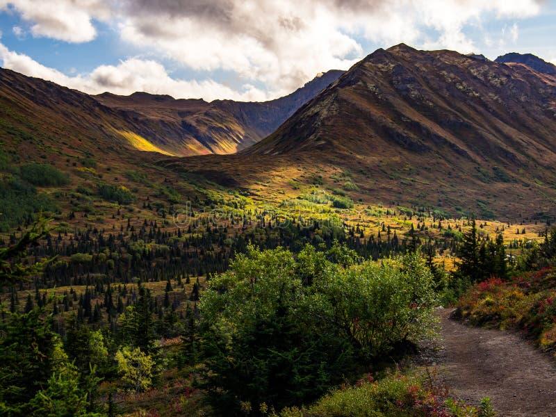 Den Forested dalen förbiser i Alaska royaltyfria foton