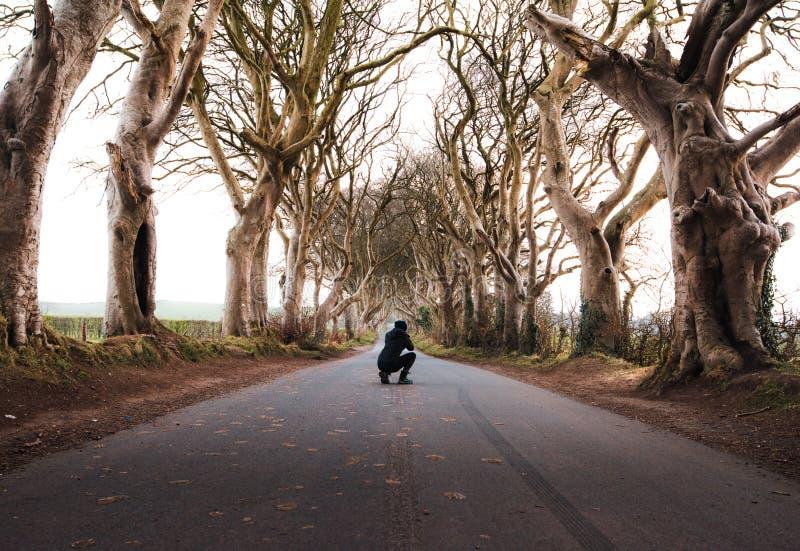 Den forntida trädtunnelen i nordligt - Irland arkivfoton