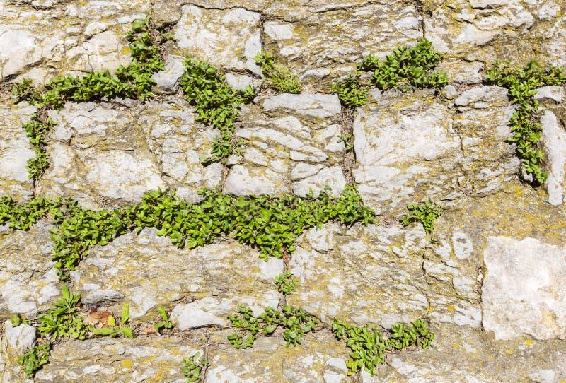 Den forntida väggen som göras av naturligt, vaggar med växter mellan kvarter royaltyfria foton
