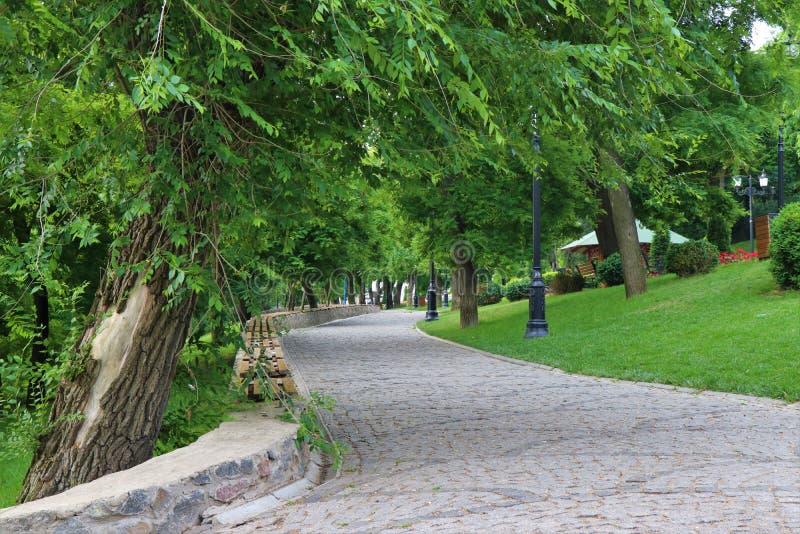 Den fot- gatan av träd i ett stort parkerar mycket Under dagen fullt av folk är att göra att jogga, eller gå omgivet av naturen fotografering för bildbyråer