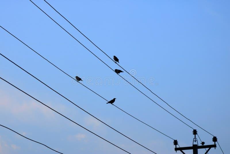 In den frühen nebeligen Morgenvögeln, die auf einer Stromleitung sitzen stockfotos
