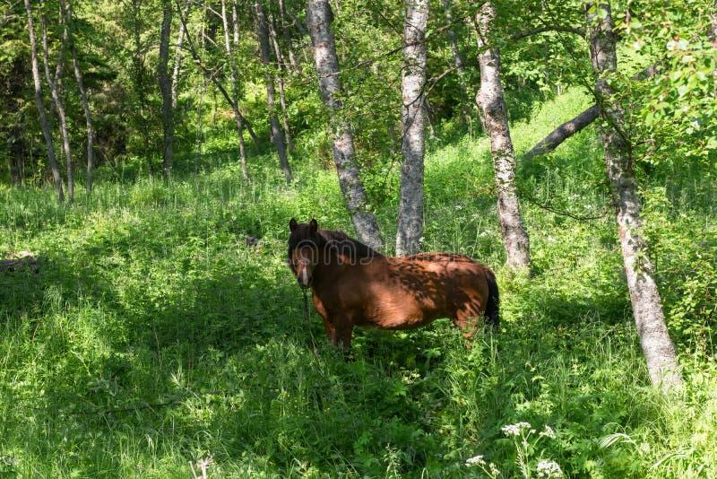 Den fria hästen betar arkivfoto