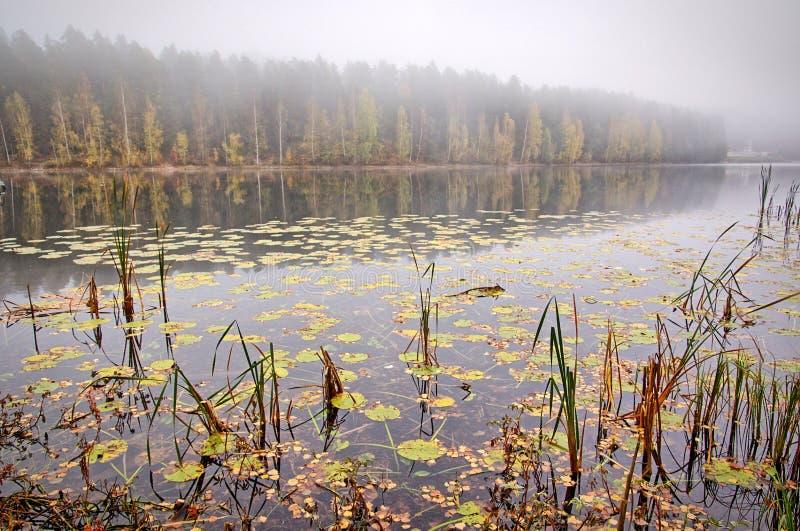Den fridsamma dimmiga höstsjösikten med den vibrerande nedgången färgar i Finland royaltyfri fotografi