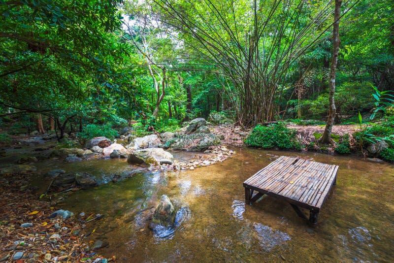 Den fridsamma djungeln med bambu vilar Seat royaltyfria foton
