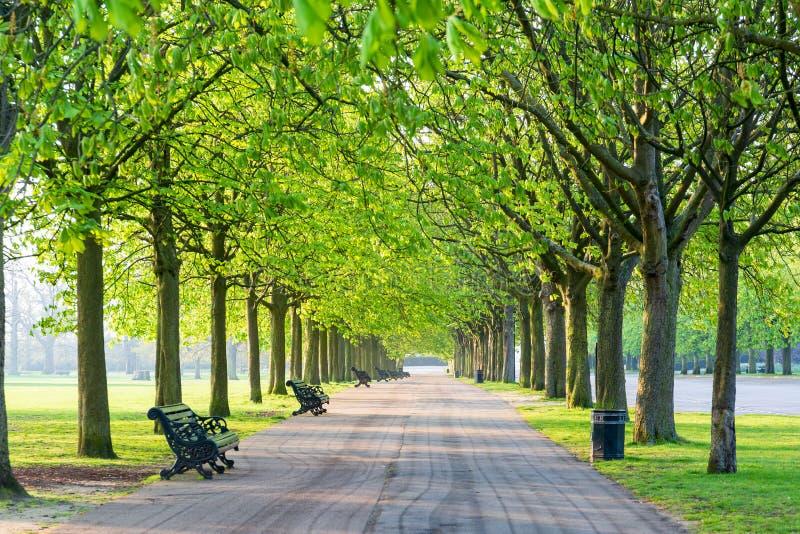Den fritids- banan i gräsplan parkerar uppställt med träd och beanch arkivbild
