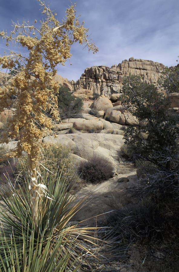 Den gömda dalen, Joshua Tree National Park, Kalifornien royaltyfria bilder