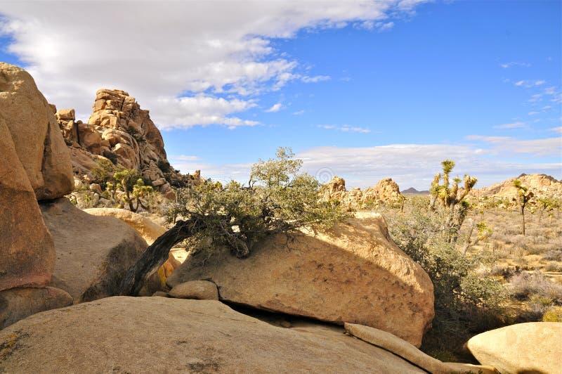 Den gömda dalen, Joshua Tree National parkerar royaltyfri fotografi