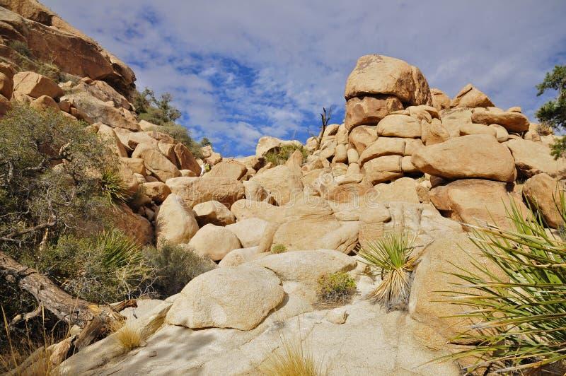 Den gömda dalen, Joshua Tree National parkerar royaltyfria foton