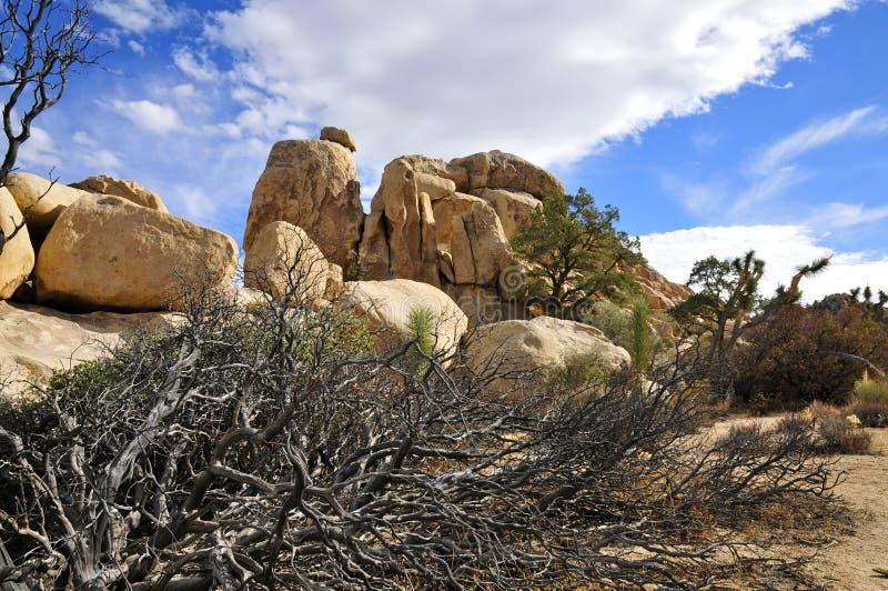 Den gömda dalen, Joshua Tree National parkerar royaltyfria bilder