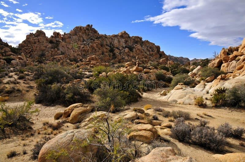 Den gömda dalen, Joshua Tree National parkerar arkivbilder