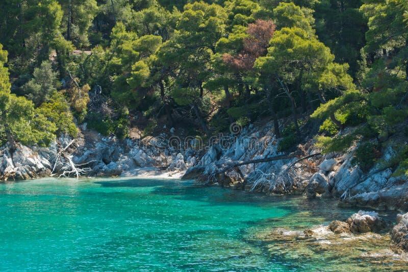 Den gömda stranden som omges med, sörjer träd och kristallklart turkosvatten nära udde Amarandos på den Skopelos ön arkivfoto