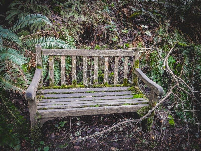 Den gamla bänken i en skog/parkerar royaltyfria bilder