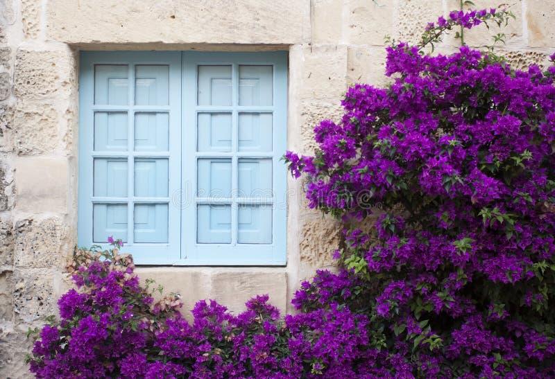 Den gamla fasaden med det blåa fönstret och lilor blommar royaltyfria bilder