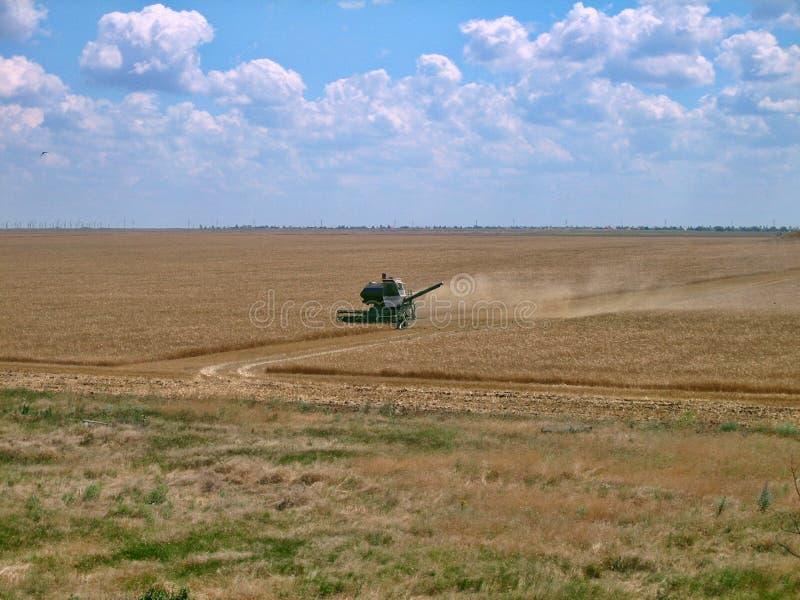 Den gamla gröna skördearbetaren tar bort korn från fältet under skörd arkivbild