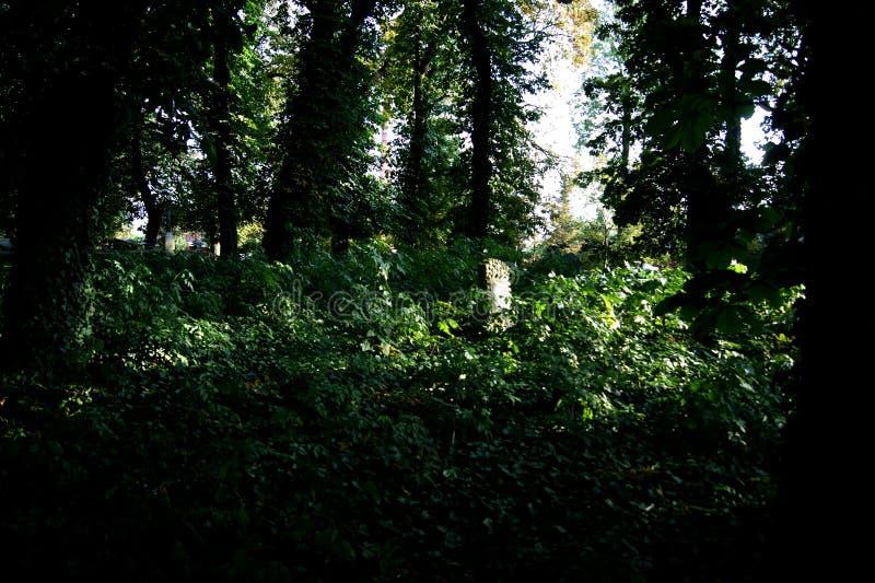 Den gamla kyrkogården royaltyfria bilder