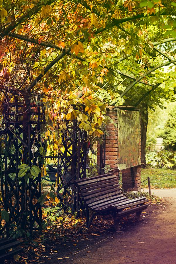 Den gamla träbänken i ett skuggigt område av trädgården eller parkerar, utomhus- fotografering för bildbyråer