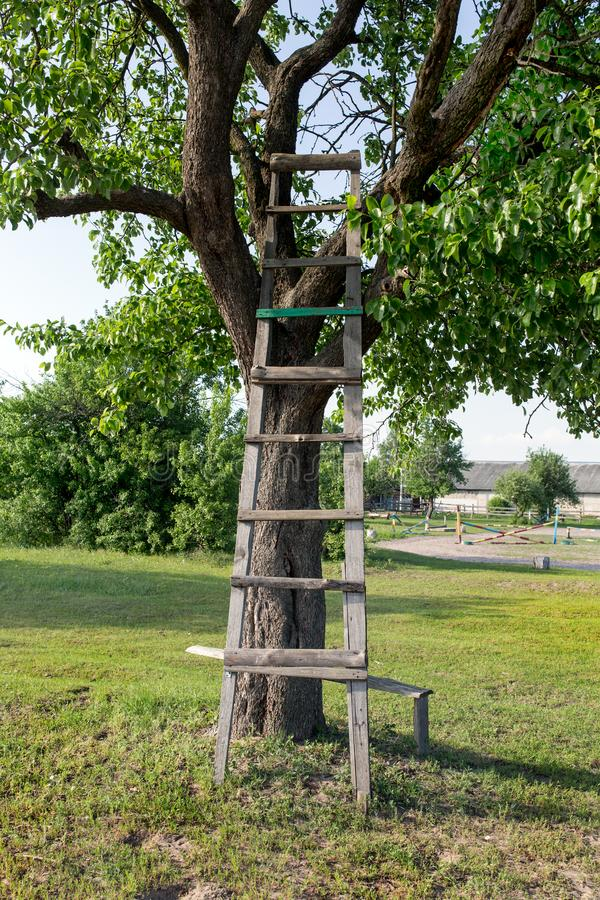 Den gamla trästegen lutar på trädet royaltyfria bilder