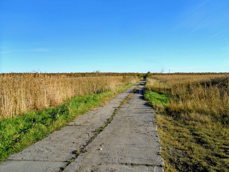 Den gamla vägen är bevuxen med gräs arkivfoton
