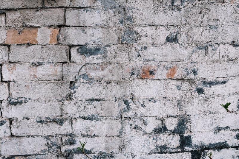 Den gamla väggen för röd tegelsten målade vitt royaltyfria foton
