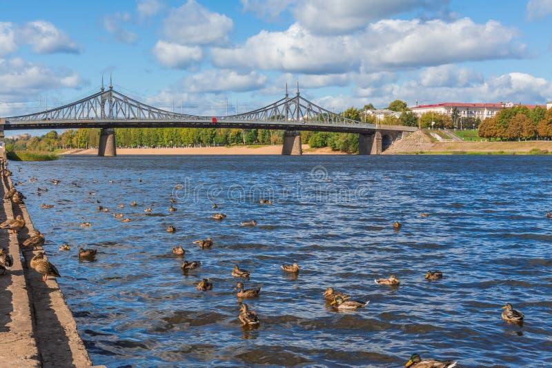 Den gamla Volga bron i Tver, Ryssland Löst gräsandandbad i floden Solig dag för höst royaltyfri fotografi