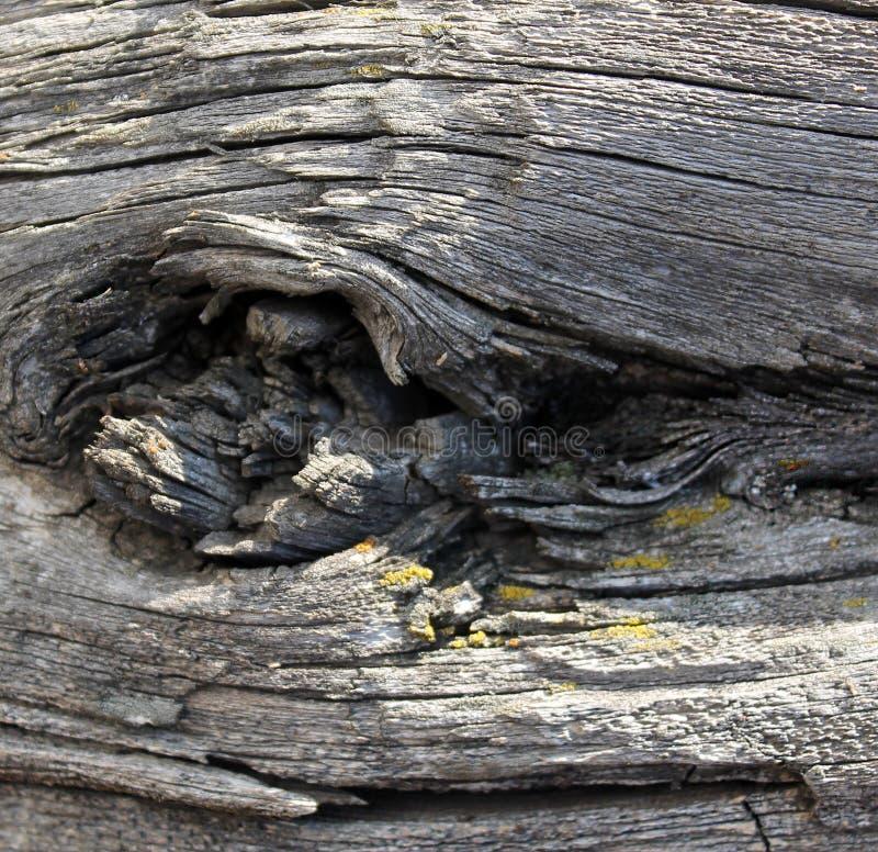 Den gamla wood texturen med naturliga modeller Inom trädbakgrunden Gamla grungy och red ut gråa träväggplankor arkivfoton