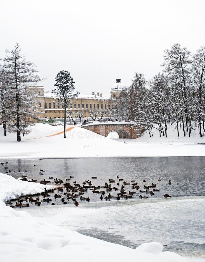 Den Gatchina slotten och parkerar i vintern arkivfoto