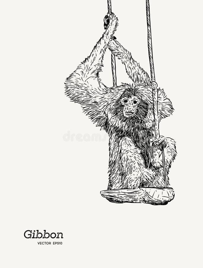 Den Gibbon apan skissar den grafiska teckningen för vektorn stock illustrationer